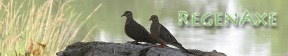 comon-ground-doves-header-2.jpg