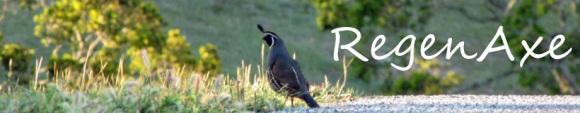 quail-header-2.jpg