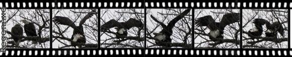eagle-header.jpg