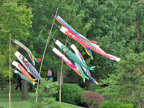 Koi windsocks regenaxe for Japanese koi windsock
