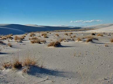 White Sands' Dunes