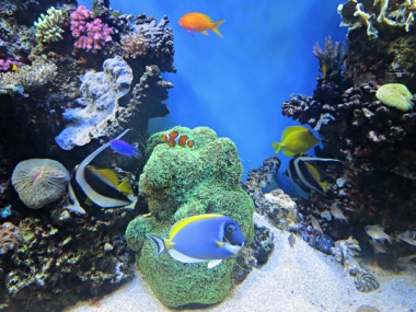 Tropical Fish Tank or Coral Fish