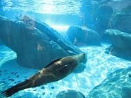 Doing the Backstroke Under the Sea
