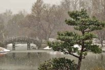 Japanese Garden in a Snow Storm