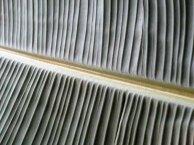 Travelers Palm Leaf