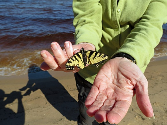 Anne with Butterfly in Hand