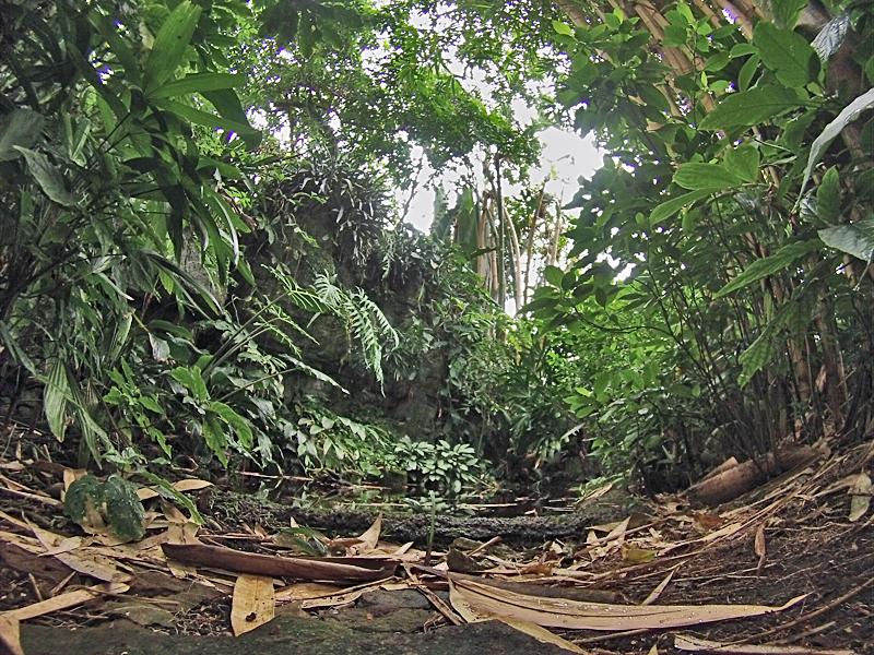 Climatron Jungle Floor