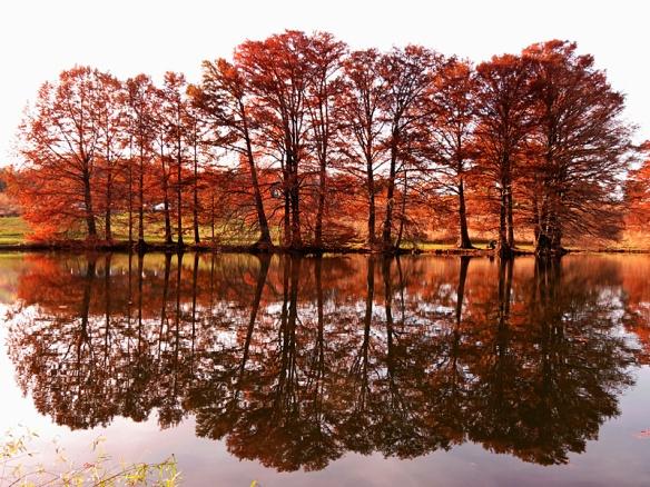 Autumn Colors Redux – More Reflected Tamaracks