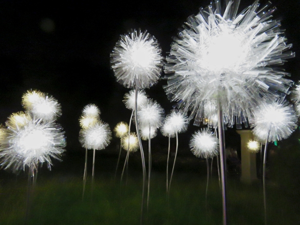 Dandelions at Night