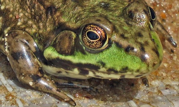 Frog's Eye View