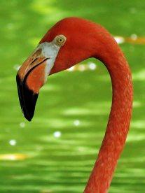 Not Quite Pink Flamingo