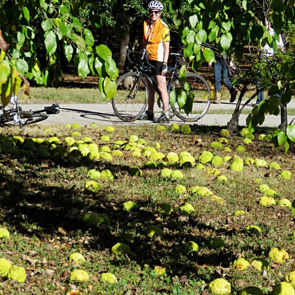 Anne and Osage Oranges