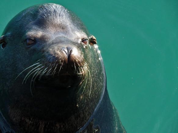 Monterey Marina Sea Lion