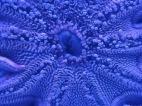 Starfish Closeup