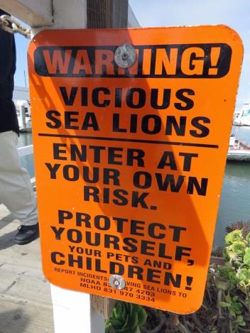Vicious Sea Lions