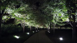 Tree Lined Path Atop Art Hill