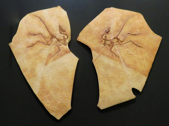 Archaeopteryx Lithographica - Ancient Wings