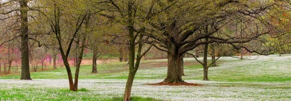 Forest Park in Spring