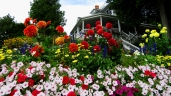 Beautiful Flowers, Beautiful Homes on Mackinac Island