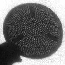 Crescent Colander Shadow