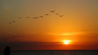 Anne's Gulf Sunset