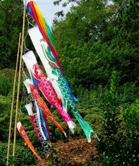 Japanese Carp Kites